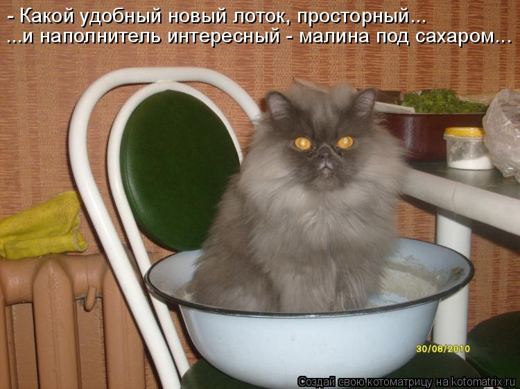 Котоматрица: ...и наполнитель интересный - малина под сахаром... - Какой удобный новый лоток, просторный...