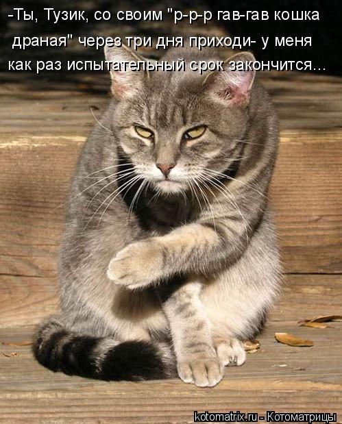 -Ты, Тузик, со своим р-р-р гав-гав кошка драная через три дня приходи- у меня как раз испытательный срок закончится...