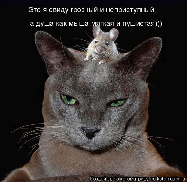 Котоматрица: а душа как мыша-мягкая и пушистая))) Это я свиду грозный и неприступный,
