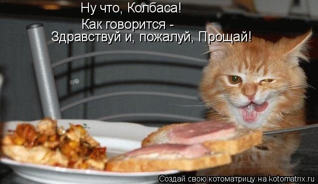 Котоматрица: Ну что, Колбаса! Как говорится -  Здравствуй и, пожалуй, Прощай!