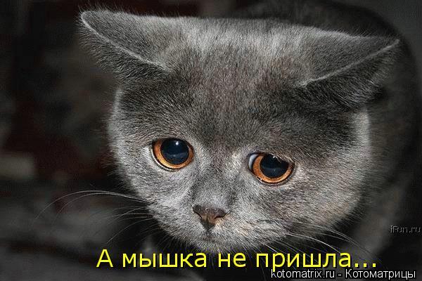 Котоматрица - А мышка не пришла...