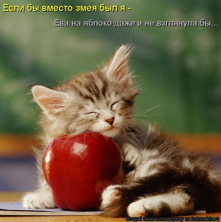 Если бы вместо змея был я -  Ева на яблоко даже и не взглянула бы...