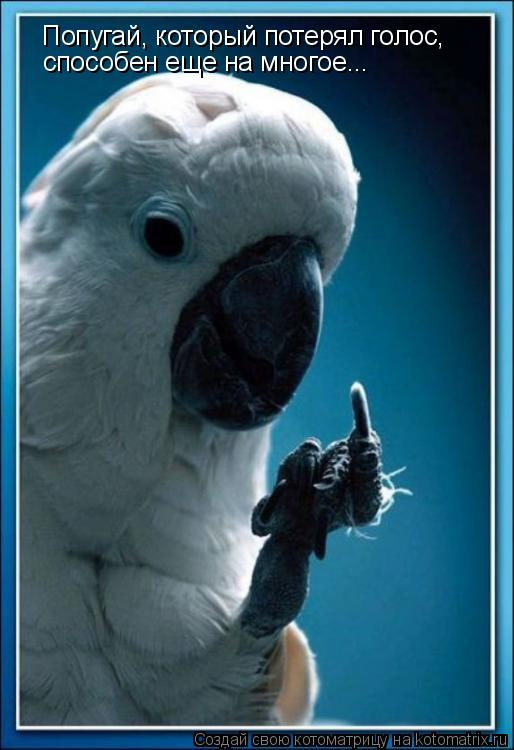 Котоматрица: Попугай, который потерял голос, способен еще на многое...