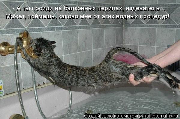 Котоматрица: - А ты посиди на балконных перилах, издеватель... Может, поймешь, каково мне от этих водных процедур!