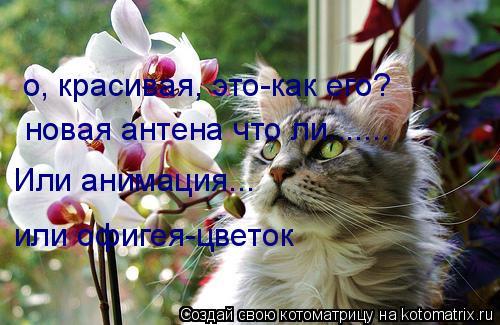 Котоматрица: о, красивая, это-как его? новая антена что ли....... Или анимация... или офигея-цветок