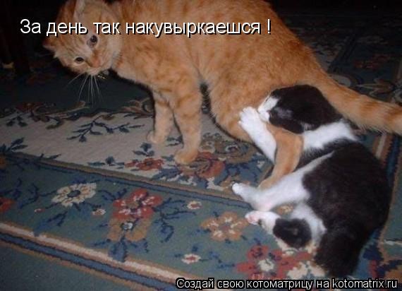 Котоматрица: За день так накувыркаешся ! Придёшь домой и ты ГРЫЗЕШЬ !!! Придёшь домой и ты ГРЫЗЕШЬ !!!