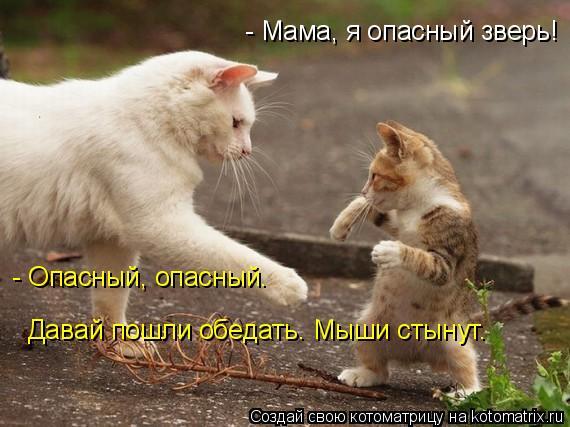 Котоматрица: - Мама, я опасный зверь! - Опасный, опасный.  Давай пошли обедать. Мыши стынут.