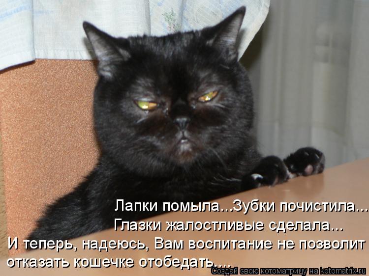 Котоматрица: Лапки помыла...Зубки почистила... Глазки жалостливые сделала... И теперь, надеюсь, Вам воспитание не позволит отказать кошечке отобедать....