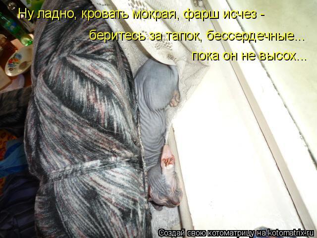 Котоматрица: Ну ладно, кровать мокрая, фарш исчез -  беритесь за тапок, бессердечные... пока он не высох...