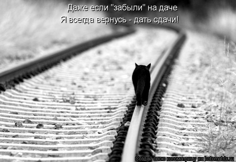 """Котоматрица: Даже если """"забыли"""" на даче Я всегда вернусь - дать сдачи!"""