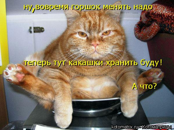 Котоматрица: ну вовремя горшок менять надо теперь тут какашки хранить буду ! А что? ,