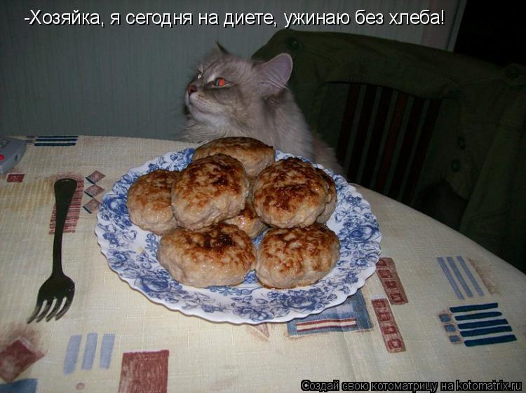 Котоматрица: -Хозяйка, я сегодня на диете, ужинаю без хлеба!