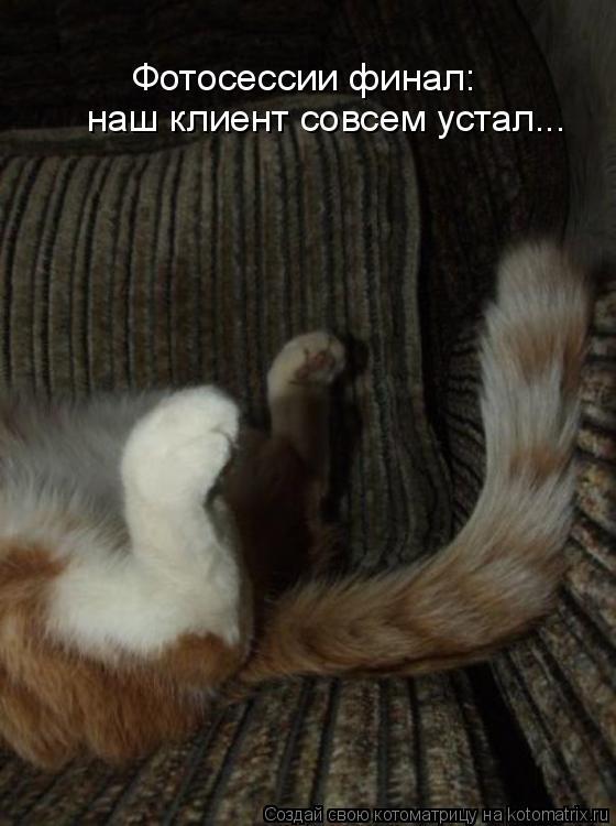 Котоматрица: Фотосессии финал: наш клиент совсем устал...