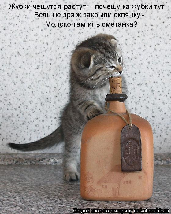 Котоматрица: Жубки чешутся-растут -- почешу ка жубки тут Ведь не зря ж закрыли склянку -  Молоко там иль сметанка?