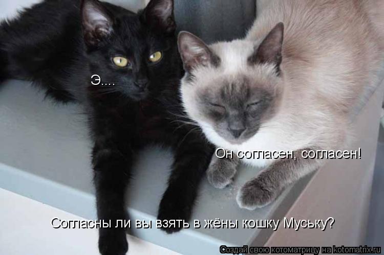 Котоматрица: Согласны ли вы взять в жёны кошку Муську? Э.... Он согласен, согласен!