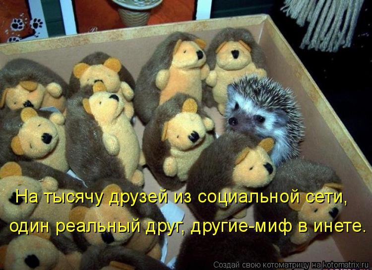 Котоматриця!)))) - Страница 3 805106