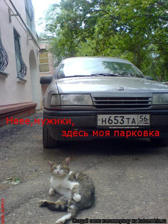 Котоматрица: Неее,мужики, здесь моя парковка