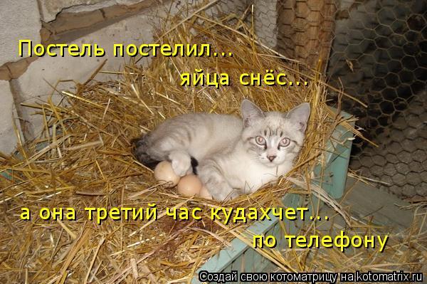 Котоматрица: Постель постелил... яйца снёс... а она третий час кудахчет... по телефону
