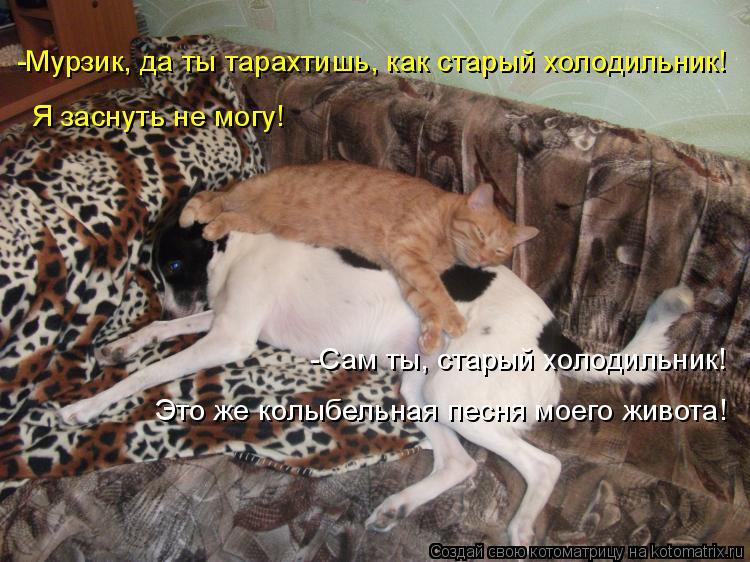 Котоматрица: -Мурзик, да ты тарахтишь, как старый холодильник! Я заснуть не могу! -Сам ты, старый холодильник! Это же колыбельная песня моего живота!