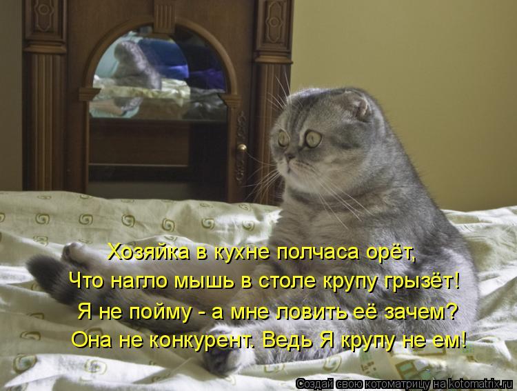Лучшие котоматрицы недели (50 фото) .