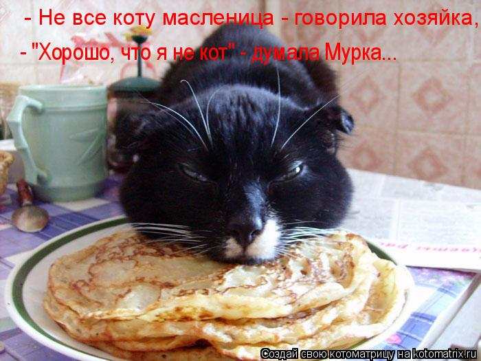 """Котоматрица: - """"Хорошо, что я не кот"""" - думала Мурка...  - Не все коту масленица - говорила хозяйка,"""