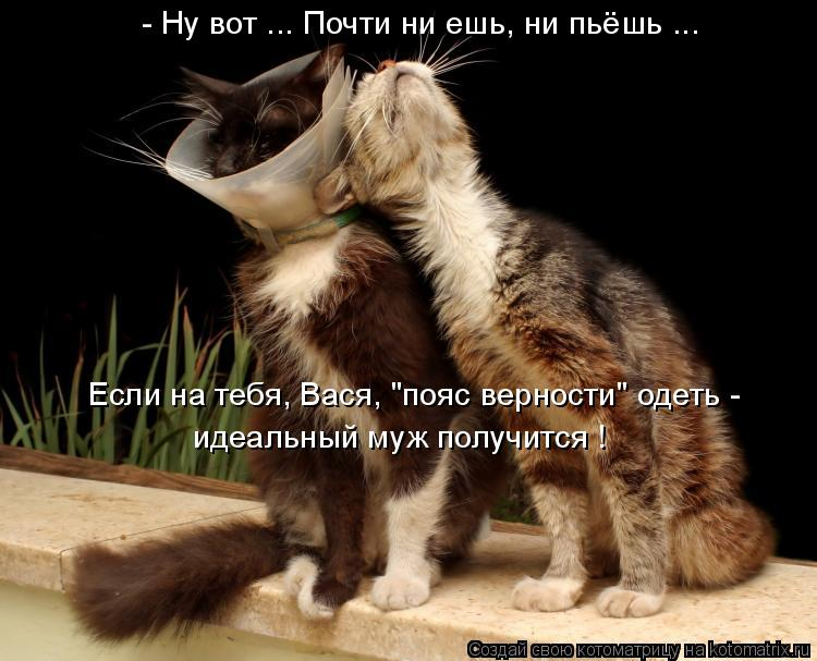 """Котоматрица: - Ну вот ... Почти ни ешь, ни пьёшь ... Если на тебя, Вася, """"пояс верности"""" одеть - идеальный муж получится !"""