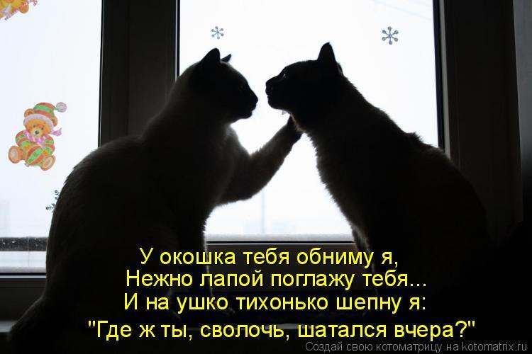 """Котоматрица: У окошка тебя обниму я,  Нежно лапой поглажу тебя... И на ушко тихонько шепну я: """"Где ж ты, сволочь, шатался вчера?"""""""