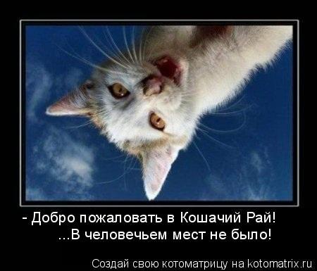 Котоматрица: - Добро пожаловать в Кошачий Рай! ...В человечьем мест не было!
