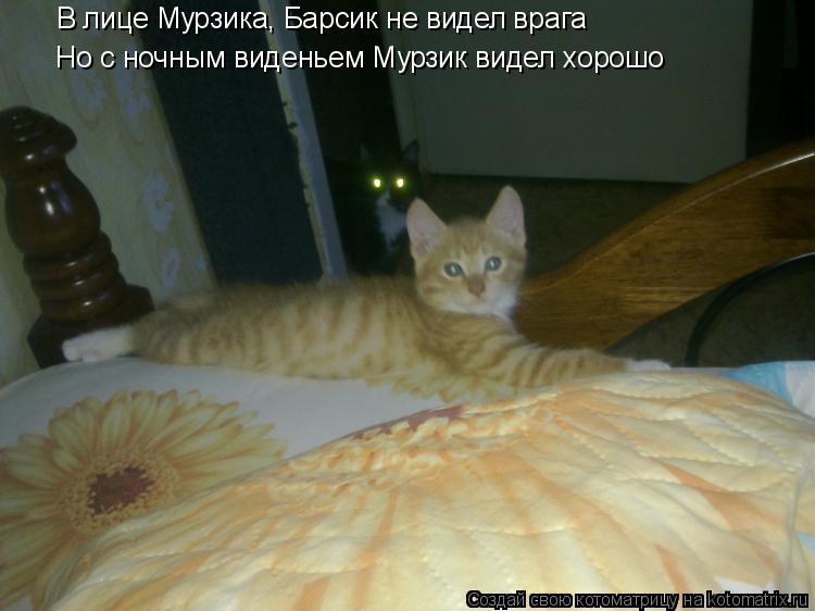 Котоматрица: В лице Мурзика, Барсик не видел врага Но с ночным виденьем Мурзик видел хорошо