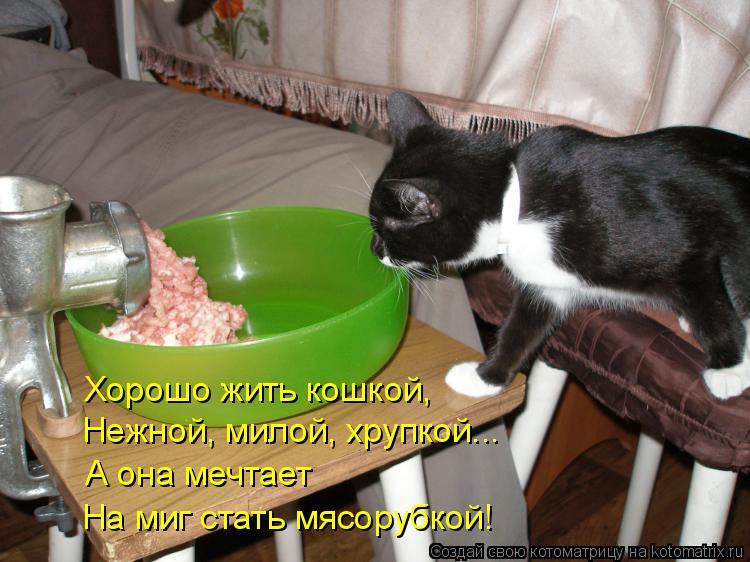 Котоматрица: Хорошо жить кошкой, Нежной, милой, хрупкой... А она мечтает На миг стать мясорубкой!