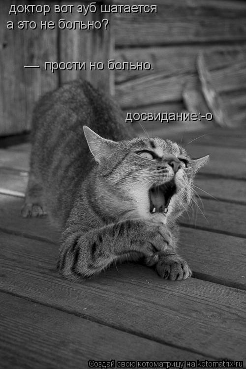 Котоматрица: доктор вот зуб шатается а это не больно? __ прости но больно. досвидание:-о