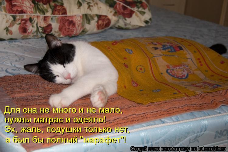"""Котоматрица: Для сна не много и не мало, нужны матрас и одеяло! Эх, жаль, подушки только нет, а был бы полный """"марафет""""!"""