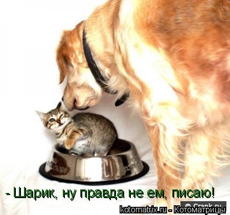 - Шарик, ну правда не ем, писаю!