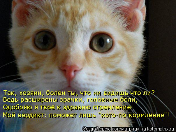 """Котоматрица: Так, хозяин, болен ты, что ни видишь что ли? Одобряю я твоё к здравию стремление! Мой вердикт: поможет лишь """"кото-по-кормление""""! Ведь расширены"""