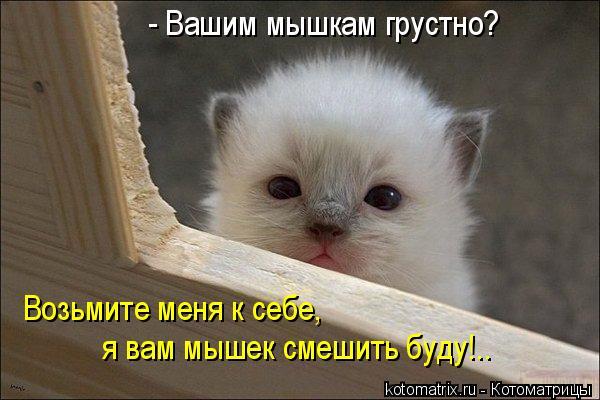 Котоматрица: - Вашим мышкам грустно?  Возьмите меня к себе,  я вам мышек смешить буду!..