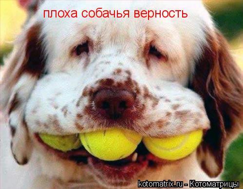 Котоматрица: плоха собачья верность