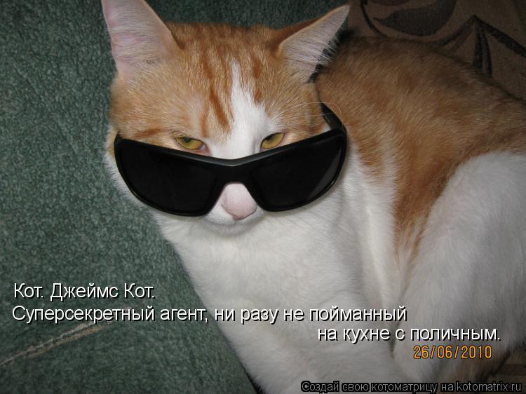 Котоматрица: Кот. Джеймс Кот.  Суперсекретный агент, ни разу не пойманный  на кухне с поличным.