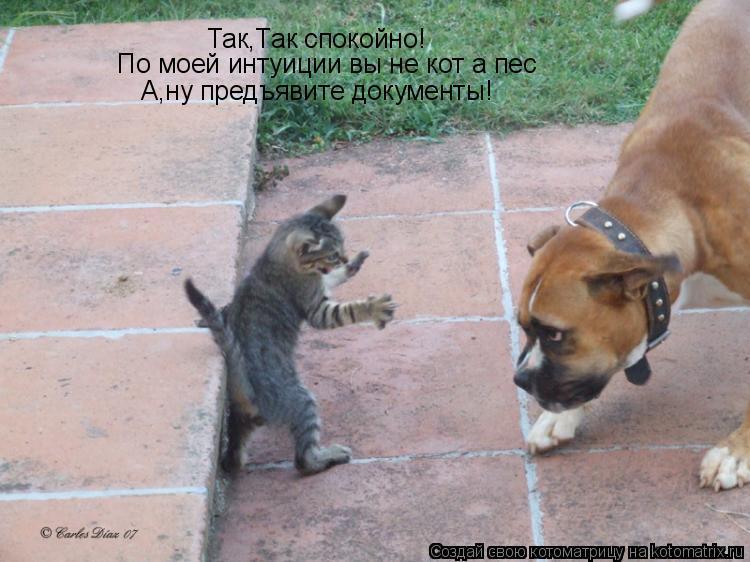 Котоматрица: Так,Так спокойно! По моей интуиции вы не кот а пес А,ну предъявите документы!