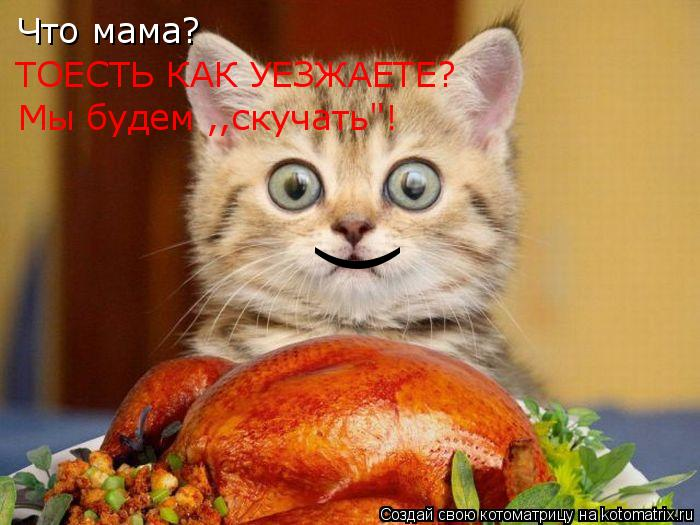 """Котоматрица: ( Что мама? ТОЕСТЬ КАК УЕЗЖАЕТЕ? Мы будем ,,скучать""""!"""