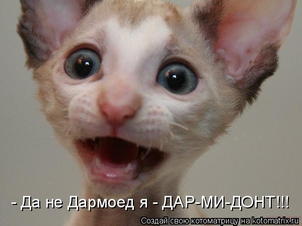 Котоматрица: - Да не Дармоед я - ДАР-МИ-ДОНТ!!!