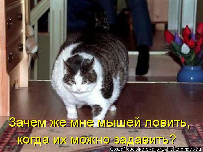 Котоматрица: Зачем же мне мышей ловить, когда их можно задавить?