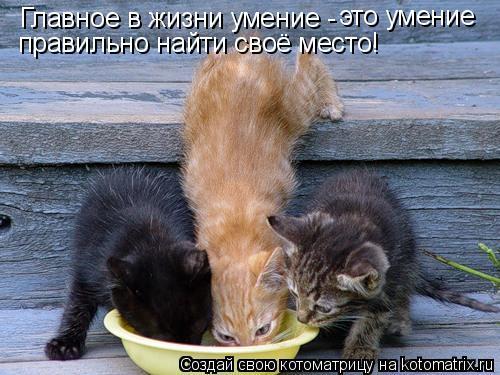 Котоматрица: Главное в жизни умение -  это умение  правильно найти своё место!