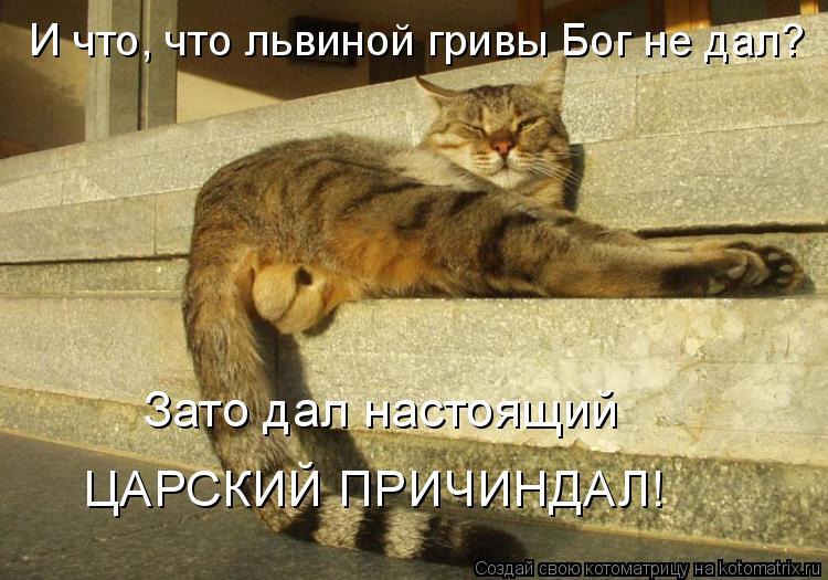 Котоматрица: И что, что львиной гривы Бог не дал? Зато дал настоящий  ЦАРСКИЙ ПРИЧИНДАЛ!