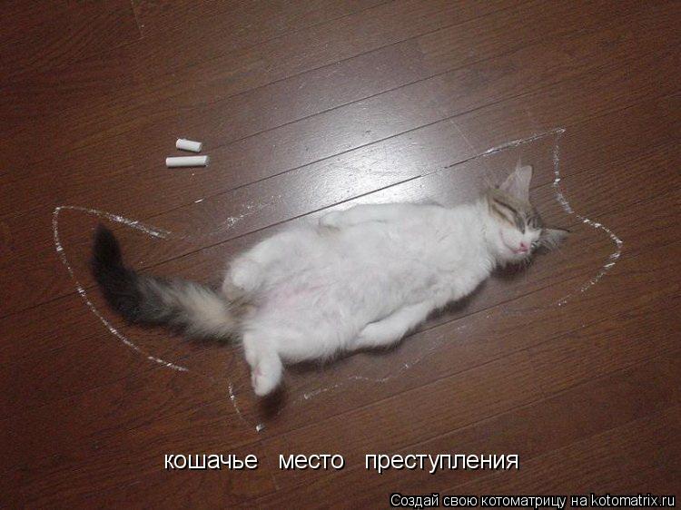 Котоматрица: кошачье   место   преступления