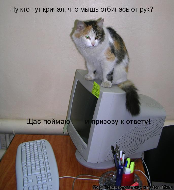 Котоматрица: Ну кто тут кричал, что мышь отбилась от рук? Щас поймаю       и призову к ответу!