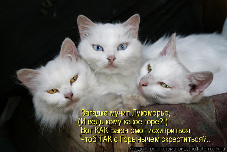 http://kotomatrix.ru/images/lolz/2011/01/30/807259.jpg