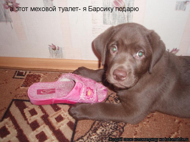 Котоматрица: а этот меховой туалет- я Барсику подарю