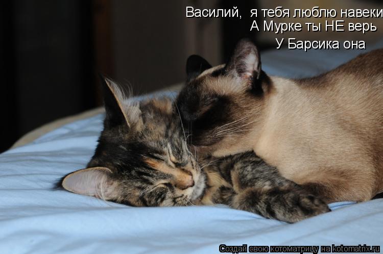 Василий,  я тебя люблю навеки А Мурке ты НЕ верь У Барсика она