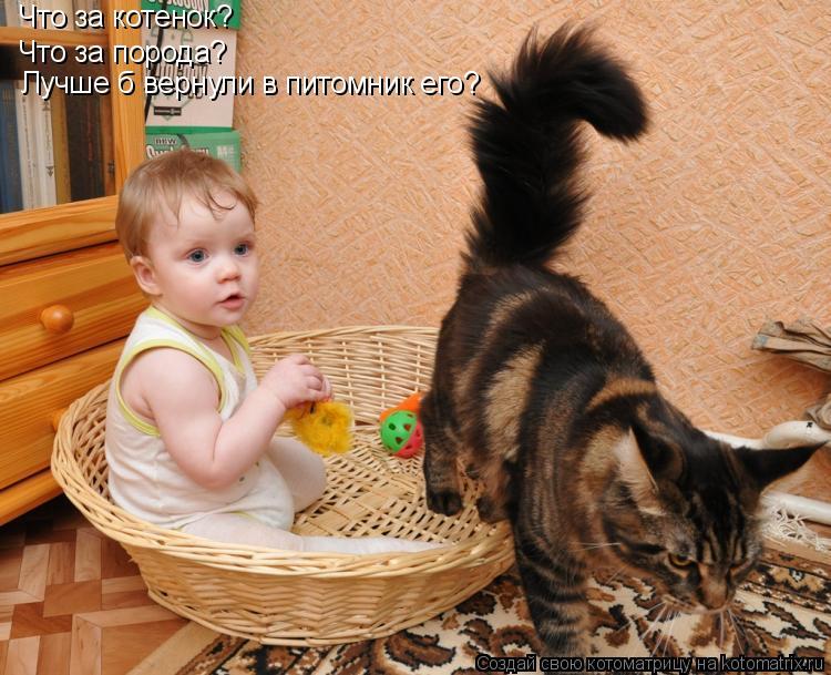 Что за котенок? Что за порода? Лучше б вернули в питомник его?