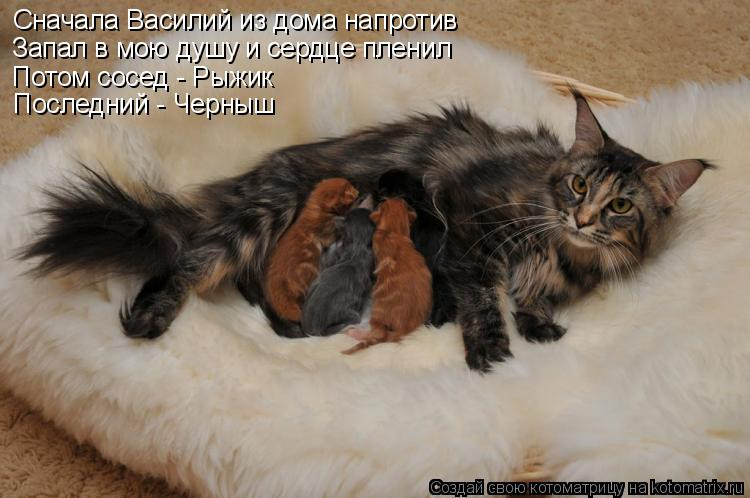 Сначала Василий из дома напротив Запал в мою душу и сердце пленил Потом сосед - Рыжик Последний - Черныш